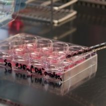 'Phony' Stem Cell Researcher To Be Punished : DNews | Stem Cells & Tissue Engineering | Scoop.it