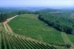 Un vin bio au bon goût de solidarité | Synapse | Vins nature, Vin de plaisir | Scoop.it