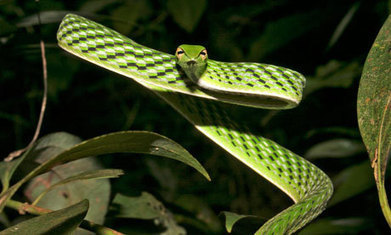 One in five reptile species face extinction – study   Seas protections   Scoop.it