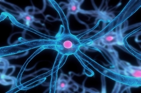 Researchers Discovered New Type brain cell | Bangalore Wishesh | Scoop.it