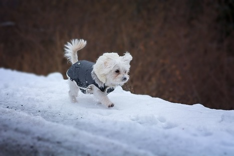 Winterizing Your Home for Happy Paws | Animal Bliss | Animal Welfare | Scoop.it
