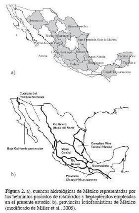Revista mexicana de biodiversidad - Composición taxonómica de los helmintos parásitos de ictalúridos y heptaptéridos (Osteichthyes: Siluriformes) de México, con una hipótesis de homología biogeográ... | Helmintos | Scoop.it