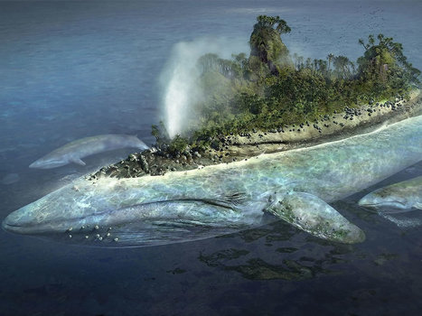 L'île Baleine. | Navigatio | Scoop.it