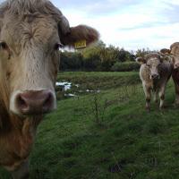 La France fermement contre la réintroduction des farines animales - Rubrique Politique sur Ecologie.tv | Notre planète | Scoop.it