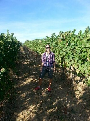 Le Marche Wines | Vineyard...Cerreto D'Esi | Wine Delight | Scoop.it