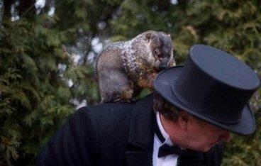 Un jour sans fin ! Micmac chez les marmottes pour prédire l'arrivée du printemps | Mais n'importe quoi ! | Scoop.it