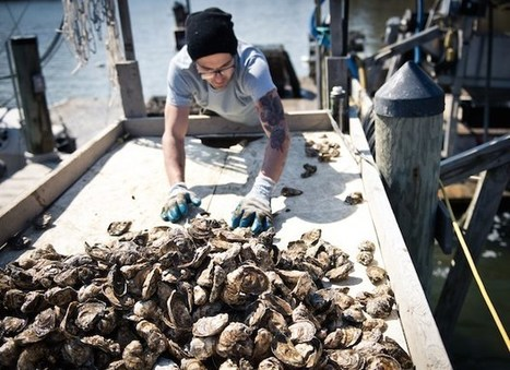 Climate change could drain global seafood supplies | Sustain Our Earth | Scoop.it