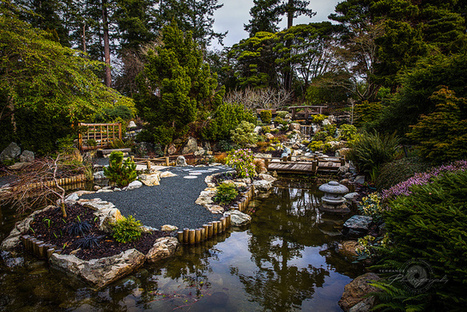 Japanese Tea Gardens | Japanese Gardens | Scoop.it