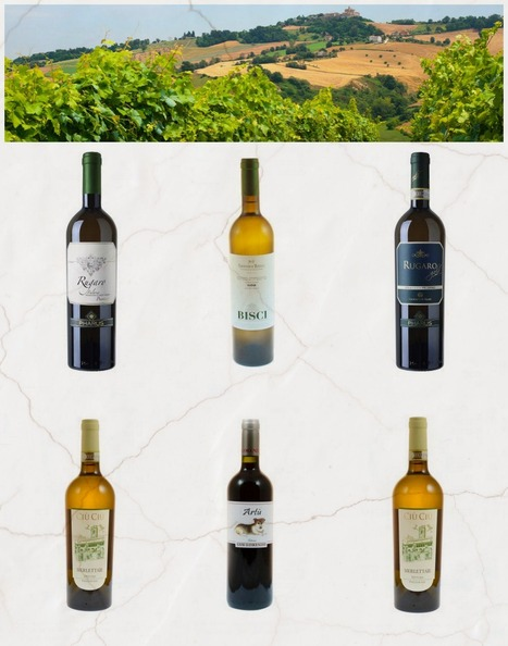 Le Marche Wines on the UK Market | Just Le Marche | Scoop.it