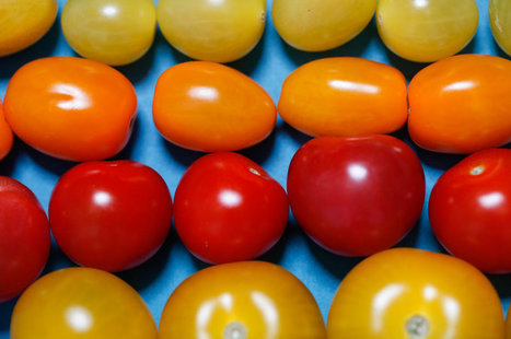 The Search For Tastier Supermarket Tomatoes: A Tale In 3 Acts | Erba Volant - Applied Plant Science | Scoop.it