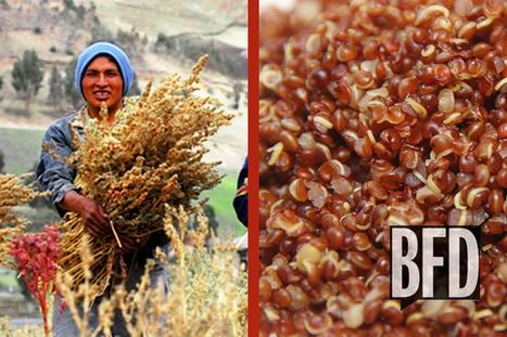 Quinoa: Bad for the Planet? | Talk Back | 9 SOSE Farm to Fridge Food Investigation | Scoop.it
