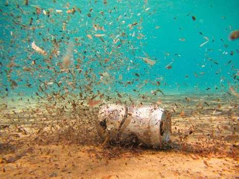 Malheureusement, les microplastiques ont aussi atteint la mer profonde | Toxique, soyons vigilant ! | Scoop.it