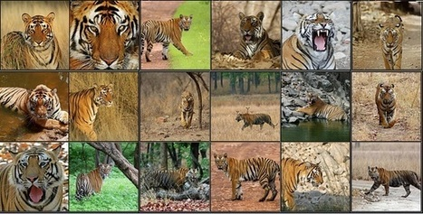 Come And Explore The Essence Of Rathambore National Park :: african safari   Safaris in India & Africa   Scoop.it