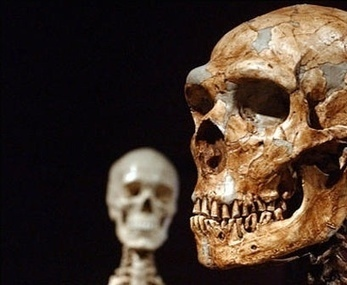 Neanderthals And 'Modern Humans' Mixed 37,000-86,000 Years Ago, New Research Says | Politically Incorrect | Scoop.it