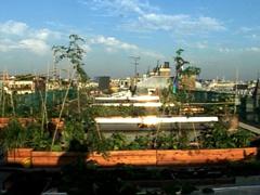 Agriculture sur les toits : une solution innovante pour cultiver en pleine ville | Locavore | Manger Juste & Local | Scoop.it