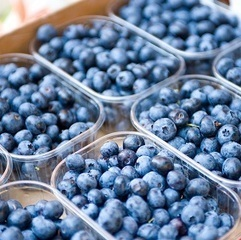 U.S.: Giumarra plans for higher Chilean blueberry volumes | Fruits & légumes à l'international | Scoop.it