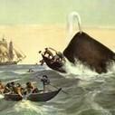 Swallowed by a whale — a true tale? | Public Relations & Social Media Insight | Scoop.it