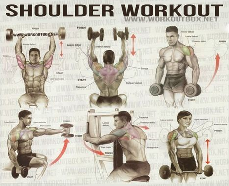 Use This Workout To Sculpt Aesthetic Shoulders That Have Great Function | The 5 Chambers Of Fitness | Scoop.it