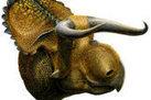 'Longhorn' Dinosaur Fossil Discovered in Utah - LiveScience.com | Geology | Scoop.it