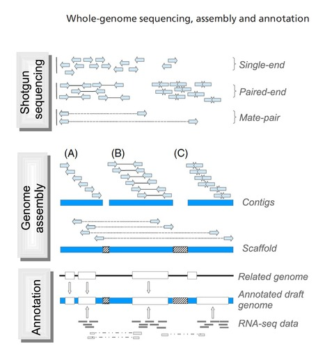 A field guide to whole-genome sequencing, assembly and annotation | Plant Genetics, NGS and Bioinformatics | Scoop.it