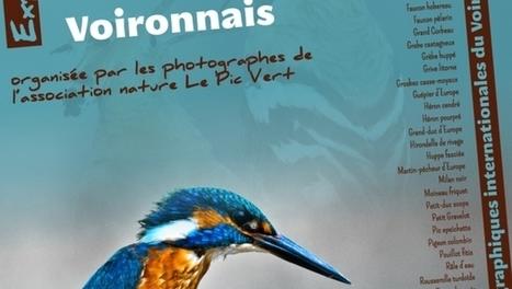 Exposition les oiseaux menacés du Pays Voironnais   Naturapics - Le web de la photographie nature   En Mode Voiron   Scoop.it