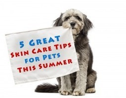 5 Great Skin Care Tips for Pets This Summer | CanadaPetCare Official Blog | Pet Supplies | Scoop.it