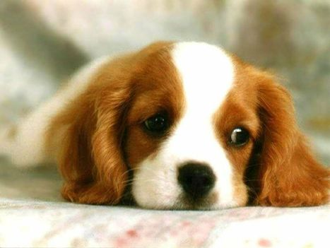 Assurance chien: Assurance chien - si vous êtes propriétaire d'un chien optez pour une bonne assurance | Assurance chien animaux | Scoop.it