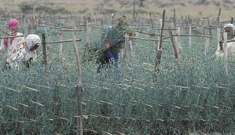Improving the lives of workers and producers through global value chains – what are some of the necessary conditions? - Business Fights Poverty | Linking small holder farmers to markets | Scoop.it