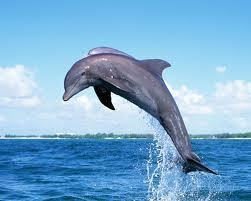 6 #Dolphins Found #Dead Along #JerseyShore in Week | Rescue our Ocean's & it's species from Man's Pollution! | Scoop.it