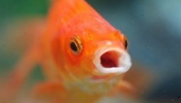 Thanks, Social Media - Our Average Attention Span Is Now Shorter Than That of a Goldfish | B2B Marketing Insider | SocialMoMojo Web | Scoop.it