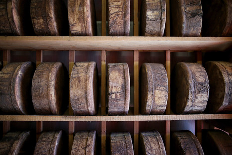Wood-aged cheese: How science slices the debate over bacteria | Microbiome | Scoop.it