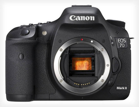 Rumor: Canon 7D Mark II Geared Toward Nature and Sports Photographers | pixels and pictures | Scoop.it