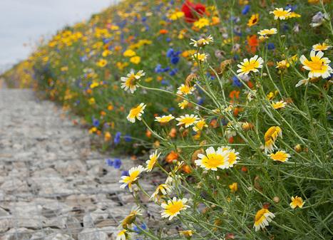 DIY: Make Your Own Wildflower Seed Bombs: Gardenista | Vertical Farm - Food Factory | Scoop.it