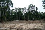 Au Laos, une déforestation massive et silencieuse - Le Viêt Nam, aujourd'hui | ECO13 | Scoop.it