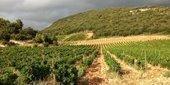 Les vins corses sous la menace d'une TVA à 20% - | Verres de Contact | Scoop.it