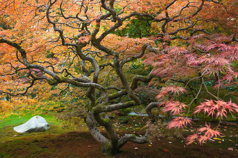 Fall Color in Seattle's Japanese Garden | A Love of Japanese Gardens | Scoop.it