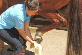Mctimoney practitioner has magical hands to make your pet fit | equinebackinaction | Scoop.it