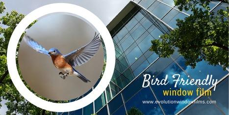 Bird Friendly Window Film - www.evolutionwindowfilms.com | Sustainability Best Practices | Scoop.it