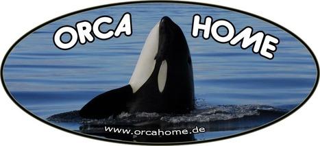 Orca Homepage   #OrcaAvengers   Scoop.it