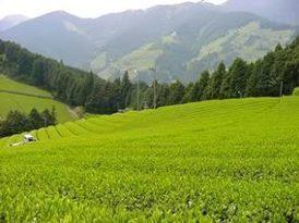 Health Article...Health benefits of Green Tea   Life Simplified   Scoop.it