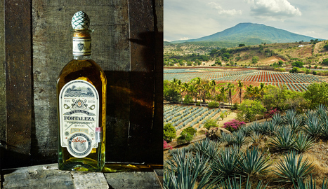 Sipping pretty: Tequila's global ambitions - Fortune   Tequila   Scoop.it