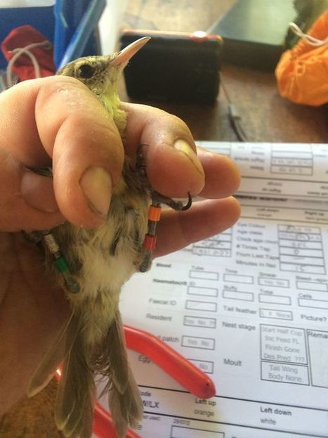 Des recherches sur les oiseaux aux Seychelles établissent un lien entre la consanguinité et la diminution de l'espérance de vie sur l'ensemble du règne animal | Biodiversité | Scoop.it