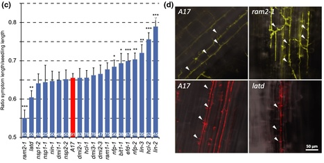 New Phytologist: Medicago truncatula symbiosis mutants affected in the interaction with a biotrophic root pathogen (2014) | Effectors and Plant Immunity | Scoop.it
