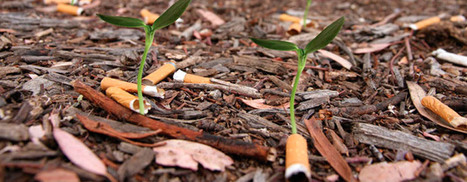 Cigg seeds: la idea del cigarrillo verde. | ECOLOGICAMENTE DISPUESTOS | Scoop.it