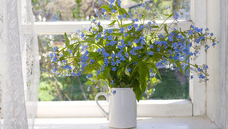 How to make the most of summer flowers indoors - Mother Nature Network | Garden, landscape, plants, flowers | Scoop.it