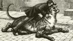 When wild beasts roamed the UK | News You Can Use - NO PINKSLIME | Scoop.it