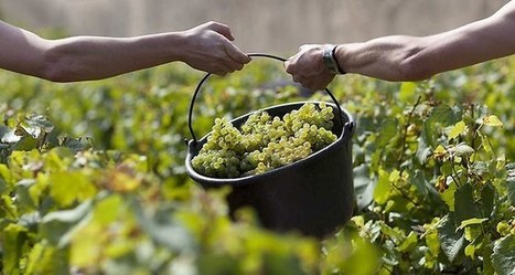 Champagne et Bourgogne entrent au patrimoine mondial de l'Unesco | Actu et Tendances Tourisme | Scoop.it