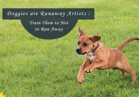 Doggies Are Runaway Artists : Train Them To Not To Run Away | Pet Care | Scoop.it