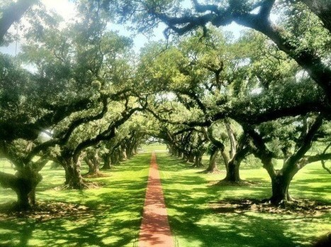 Favorite Places & Spaces - Oak Alley Alley Shot! | Oak Alley Plantation: Things to see! | Scoop.it
