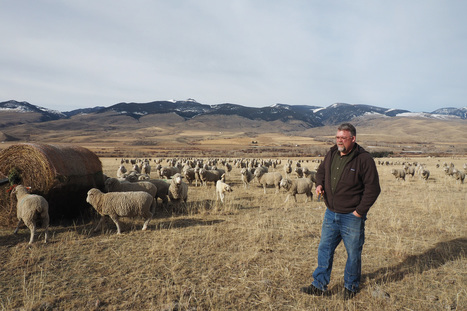 Montana rancher looks to the past to prepare for tomorrow's climate | Farming, Forests, Water & Fishing (No Petroleum Added) | Scoop.it